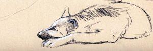 drawing of a sleeping german shepherd