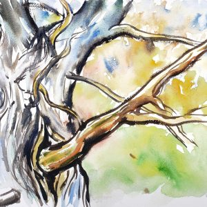 bold, graphical watercolor of cedar tree with a wash of blended colors to depict the foliage.